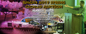 AuctionSPRING2019
